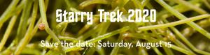 starry_trek_2020